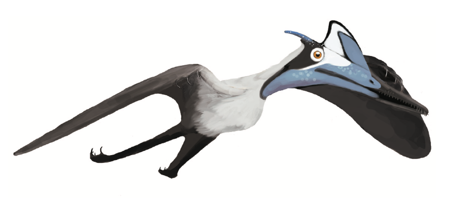 Pterodactylus_BMMS7_life