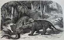 220px-Iguanodon_versus_Megalosaurus
