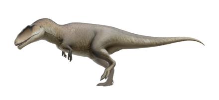 440px-Carcharodontosaurus